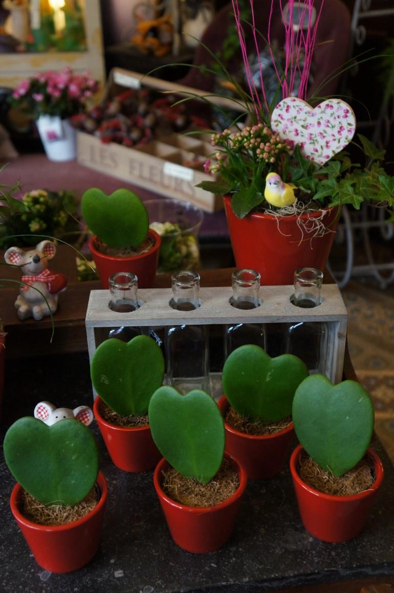 Scylla fleurs/ Pic by kiwikoo